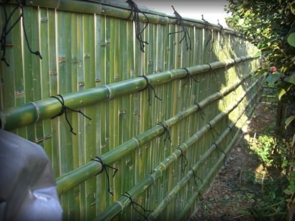 Palissage en bambou